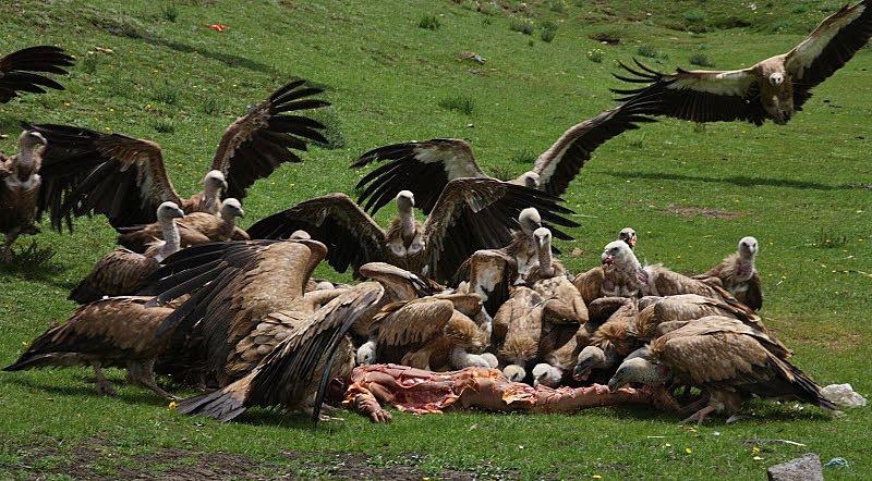 Культура и этика охотника